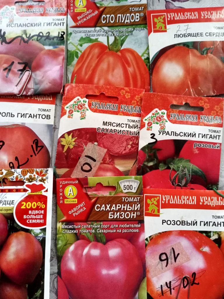 Выращивание помидоры-увлекательное занятие