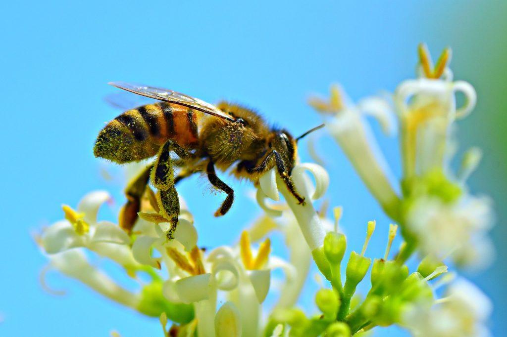 Травы помогающие пчелам